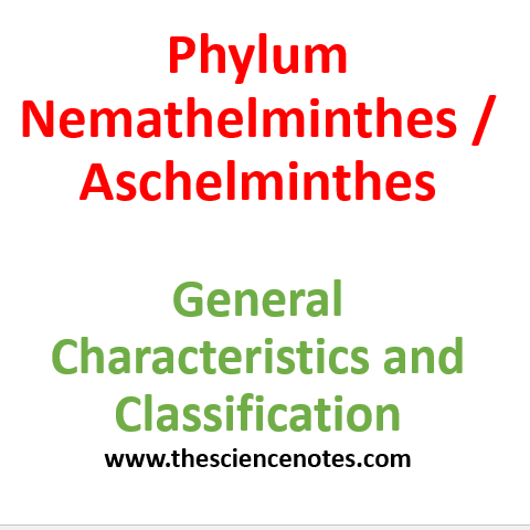 aschelminthe canceroase sau nemathelminthes)