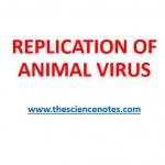 REPLICATION OF ANIMAL VIRUS