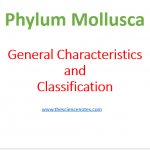 Phylum Mollusca : General Characteristics and Classification